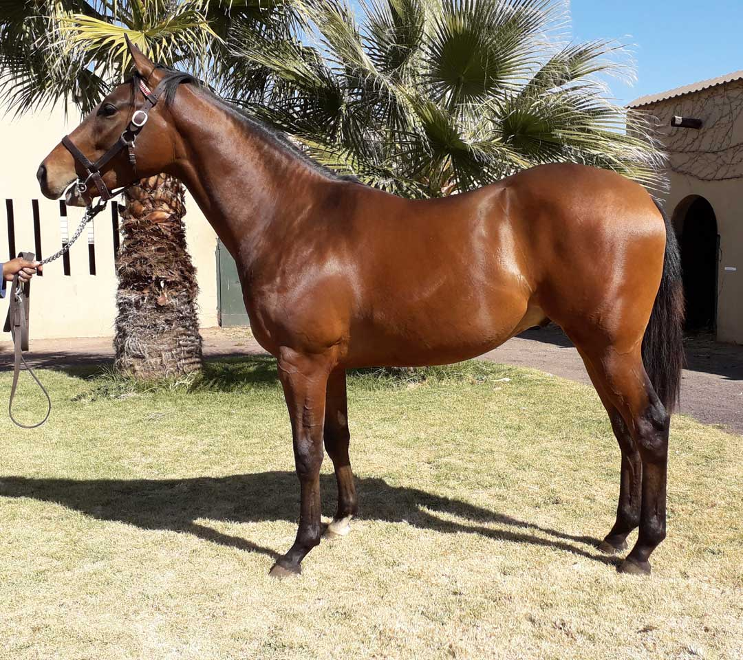 Thoroughbred Auctions